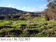 Green field and ruins of fortress in Ingapirca in Ecuador. Стоковое фото, фотограф Zoonar.com/Valeriy Shanin / age Fotostock / Фотобанк Лори