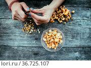 Preparing chanterelle mushrooms on an old rustic wooden table. Стоковое фото, фотограф Zoonar.com/Patrick Daxenbichler / easy Fotostock / Фотобанк Лори