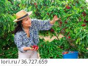 Woman is working on the plantation. Стоковое фото, фотограф Яков Филимонов / Фотобанк Лори