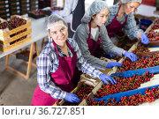 Three women are sorting red cherries. Стоковое фото, фотограф Яков Филимонов / Фотобанк Лори