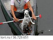 Jack Russell Terrier in einem Kanu. Стоковое фото, фотограф Zoonar.com/Martina Berg / easy Fotostock / Фотобанк Лори