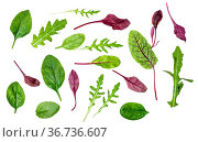 Different leaves of various leafy vegetables (chard, spinach, arugula... Стоковое фото, фотограф Zoonar.com/Valery Voennyy / easy Fotostock / Фотобанк Лори