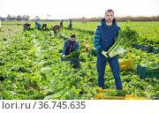 Confident farmer showing celery harvest. Стоковое фото, фотограф Яков Филимонов / Фотобанк Лори