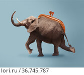 Budget safari - happy elephant and wallet concept. Стоковое фото, фотограф Сергей Новиков / Фотобанк Лори