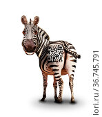 Smiling zebra with QR barcode. Стоковое фото, фотограф Сергей Новиков / Фотобанк Лори