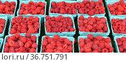 Ripe raspberries for sale in cardboard punnets. Стоковое фото, фотограф Валерия Попова / Фотобанк Лори