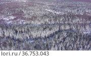 Top view of winter forest on a sunny day. Стоковое видео, видеограф Яков Филимонов / Фотобанк Лори