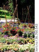 Ein buntes Gartenbeet mit verschiedenen Blüten und zu einem Zelt zusammengebundenen... Стоковое фото, фотограф Zoonar.com/Bastian Kienitz / easy Fotostock / Фотобанк Лори