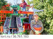 Successful farmer holding bucket with freshly picked plums in orchard. Стоковое фото, фотограф Яков Филимонов / Фотобанк Лори