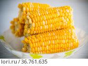 a few heads of boiled corn on a plate. Стоковое фото, фотограф Peredniankina / Фотобанк Лори