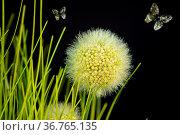 Kunstgräser. Стоковое фото, фотограф Zoonar.com/Thomas Riess / age Fotostock / Фотобанк Лори