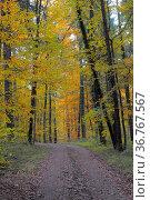 Kraichgau, Laubwald im Herbst, Стоковое фото, фотограф Zoonar.com/Bildagentur Geduldig / easy Fotostock / Фотобанк Лори