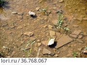 Die Draufsicht und Nahaufnahme auf die Steine eines Geröllbettes in... Стоковое фото, фотограф Zoonar.com/Bastian Kienitz / easy Fotostock / Фотобанк Лори