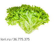 Fresh green Ice leaf lettuce isolated on white background. Стоковое фото, фотограф Zoonar.com/Valery Voennyy / easy Fotostock / Фотобанк Лори