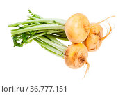 Bunch of fresh yellow turnips with stems isolated on white background. Стоковое фото, фотограф Zoonar.com/Valery Voennyy / easy Fotostock / Фотобанк Лори
