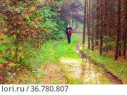 beautiful mature women walk through the woods on a summer day. Стоковое фото, фотограф Акиньшин Владимир / Фотобанк Лори