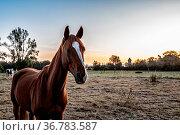 Pferde auf der Koppel. Стоковое фото, фотограф Zoonar.com/THOMAS RIESS / age Fotostock / Фотобанк Лори