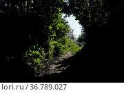Licht und Schatten auf einem Wanderweg am Waldrand auf dem Sipplinger... Стоковое фото, фотограф Zoonar.com/Jürgen Vogt / easy Fotostock / Фотобанк Лори