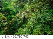 Lush rainforest canopy view at La Fortuna Costa Rica. Стоковое фото, фотограф Zoonar.com/Juhani Viitanen / easy Fotostock / Фотобанк Лори