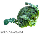 Fresh green Broccoli with leaves isolated on white background. Стоковое фото, фотограф Zoonar.com/Valery Voennyy / easy Fotostock / Фотобанк Лори