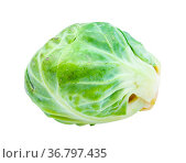 Fresh brussels sprout isolated on white background. Стоковое фото, фотограф Zoonar.com/Valery Voennyy / easy Fotostock / Фотобанк Лори