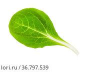 Green leaf of corn salad (mache, feld salat, etc) isolated on white... Стоковое фото, фотограф Zoonar.com/Valery Voennyy / easy Fotostock / Фотобанк Лори