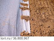 Eine Kunststoffplane beim Pflanzenanbau zum Schutz junger Triebe. Стоковое фото, фотограф Zoonar.com/Bastian Kienitz / easy Fotostock / Фотобанк Лори