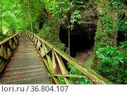 Boardwalk and small cave in Niah national park Borneo Malaysia. Стоковое фото, фотограф Zoonar.com/Juhani Viitanen / easy Fotostock / Фотобанк Лори