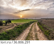 Sunrise, road, olives and fields. Pinto. Madrid. Spain. Europe. Стоковое фото, фотограф María del Valle Martín Morales / age Fotostock / Фотобанк Лори