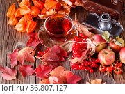 Fall harvesting on rustic wooden background with vintage camera. Стоковое фото, фотограф Zoonar.com/Photographer: Andrey N.Cherkasov / easy Fotostock / Фотобанк Лори