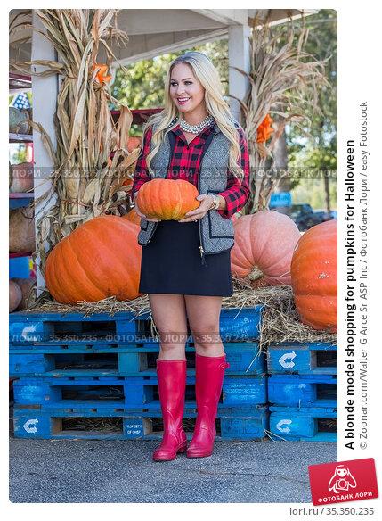 A blonde model shopping for pumpkins for Halloween. Стоковое фото, фотограф Zoonar.com/Walter G Arce Sr ASP Inc / easy Fotostock / Фотобанк Лори