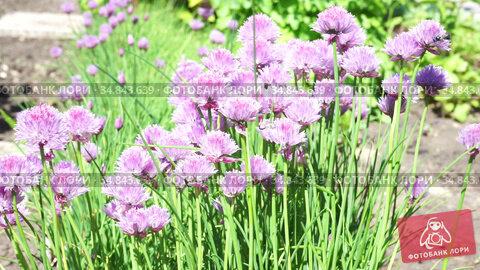 A close up of a purple flower. Стоковое видео, видеограф Игорь Соловьев / Фотобанк Лори