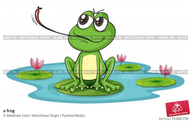 a frog. Стоковая иллюстрация, иллюстратор Matthew Cole / PantherMedia / Фотобанк Лори