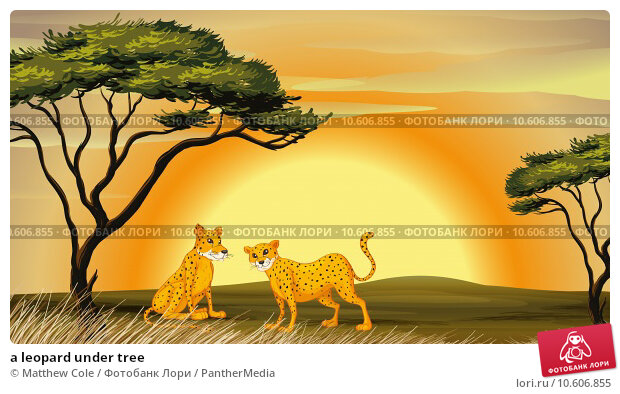 a leopard under tree. Стоковая иллюстрация, иллюстратор Matthew Cole / PantherMedia / Фотобанк Лори