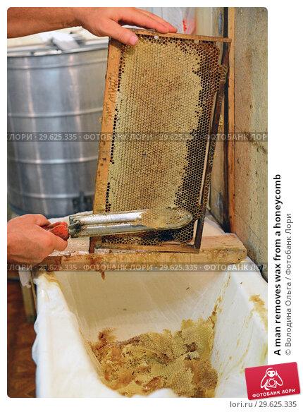 Купить «A man removes wax from a honeycomb», фото № 29625335, снято 7 августа 2017 г. (c) Володина Ольга / Фотобанк Лори