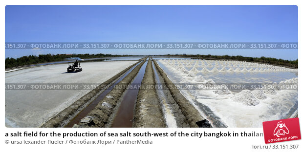Купить «a salt field for the production of sea salt south-west of the city bangkok in thailand in southeast asia.», фото № 33151307, снято 26 мая 2020 г. (c) PantherMedia / Фотобанк Лори