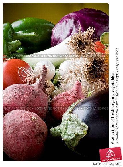 A selection of fresh organic vegetables. Стоковое фото, фотограф Zoonar.com/Roberto Rizzo / easy Fotostock / Фотобанк Лори