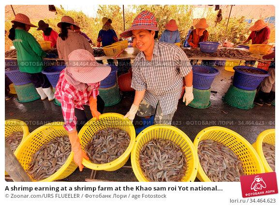 A shrimp earning at a shrimp farm at the Khao sam roi Yot national... Стоковое фото, фотограф Zoonar.com/URS FLUEELER / age Fotostock / Фотобанк Лори
