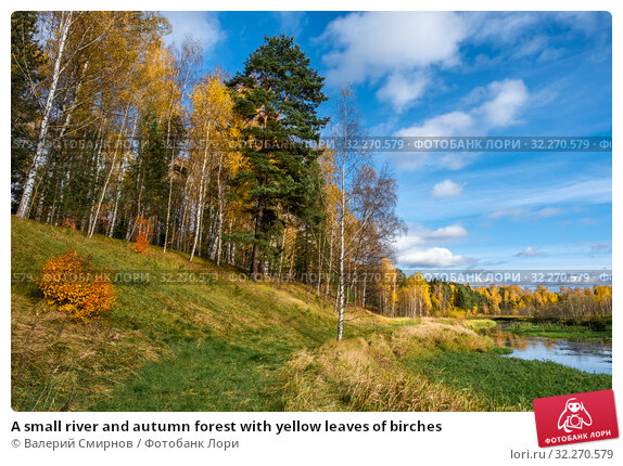 Купить «A small river and autumn forest with yellow leaves of birches», фото № 32270579, снято 5 октября 2019 г. (c) Валерий Смирнов / Фотобанк Лори