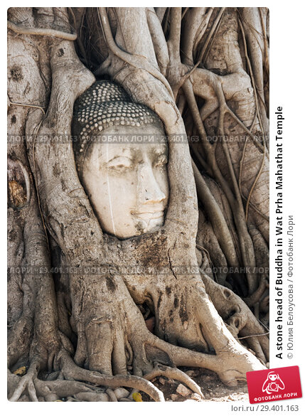 Купить «A stone head of Buddha in Wat Prha Mahathat Temple», фото № 29401163, снято 27 января 2017 г. (c) Юлия Белоусова / Фотобанк Лори