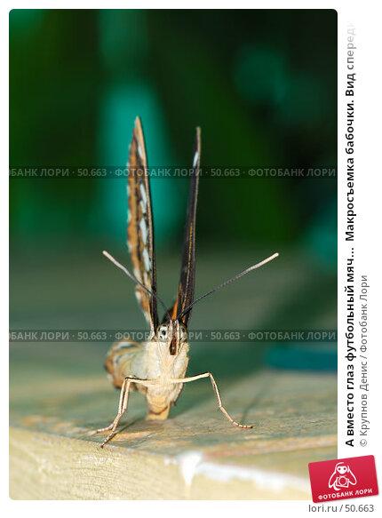 А вместо глаз футбольный мяч...  Макросъемка бабочки. Вид спереди., фото № 50663, снято 7 мая 2007 г. (c) Крупнов Денис / Фотобанк Лори