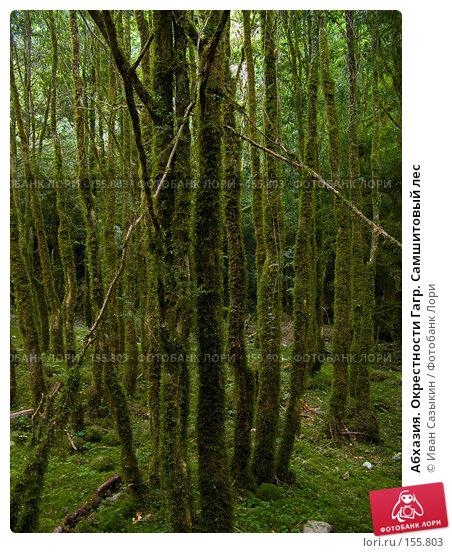 Абхазия. Окрестности Гагр. Самшитовый лес, фото № 155803, снято 8 августа 2007 г. (c) Иван Сазыкин / Фотобанк Лори