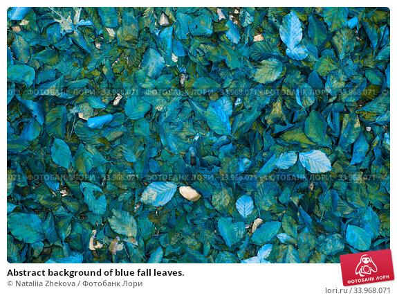 Купить «Abstract background of blue fall leaves.», фото № 33968071, снято 30 октября 2019 г. (c) Nataliia Zhekova / Фотобанк Лори