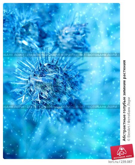Абстрактные голубые зимние растения, иллюстрация № 239087 (c) ElenArt / Фотобанк Лори