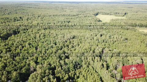 Купить «Aerial view of picturesque forest landscape in central Russia on summer day», видеоролик № 29084139, снято 28 июня 2018 г. (c) Яков Филимонов / Фотобанк Лори