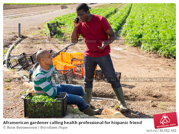 Aframerican gardener calling health professional for hispanic friend. Стоковое фото, фотограф Яков Филимонов / Фотобанк Лори