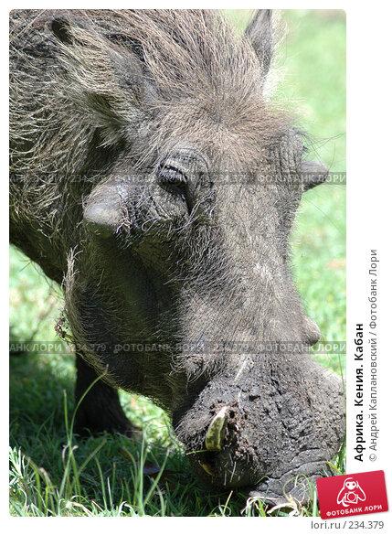Африка. Кения. Кабан, фото № 234379, снято 12 февраля 2005 г. (c) Андрей Каплановский / Фотобанк Лори