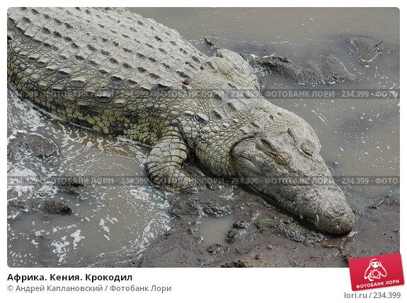 Африка. Кения. Крокодил, фото № 234399, снято 13 февраля 2005 г. (c) Андрей Каплановский / Фотобанк Лори