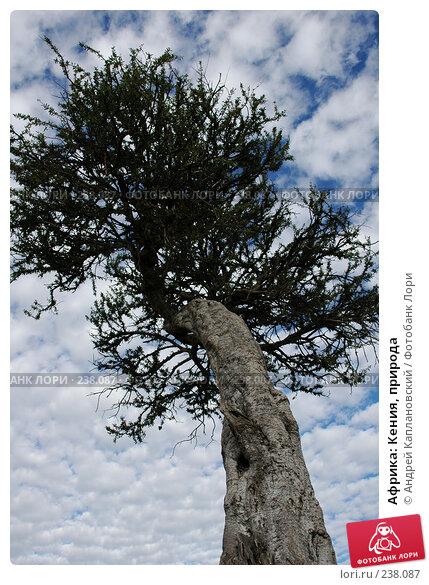 Африка: Кения, природа, фото № 238087, снято 17 февраля 2005 г. (c) Андрей Каплановский / Фотобанк Лори