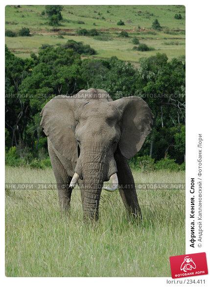 Африка. Кения. Слон, фото № 234411, снято 13 февраля 2005 г. (c) Андрей Каплановский / Фотобанк Лори